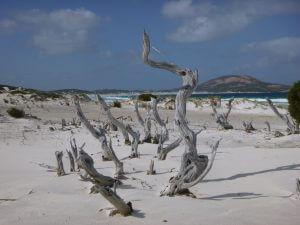 Enjoy an exciting trip to Cape Le Grand National Park next to Orleans Bay Caravan Park 1