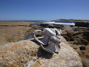 Orleans Bay Caravan Park - Little Wharton bones